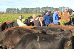 rakaia-island-dairy-farm-farming-dairy-1-unit-1-gallery-6