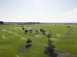 Manuka Farm